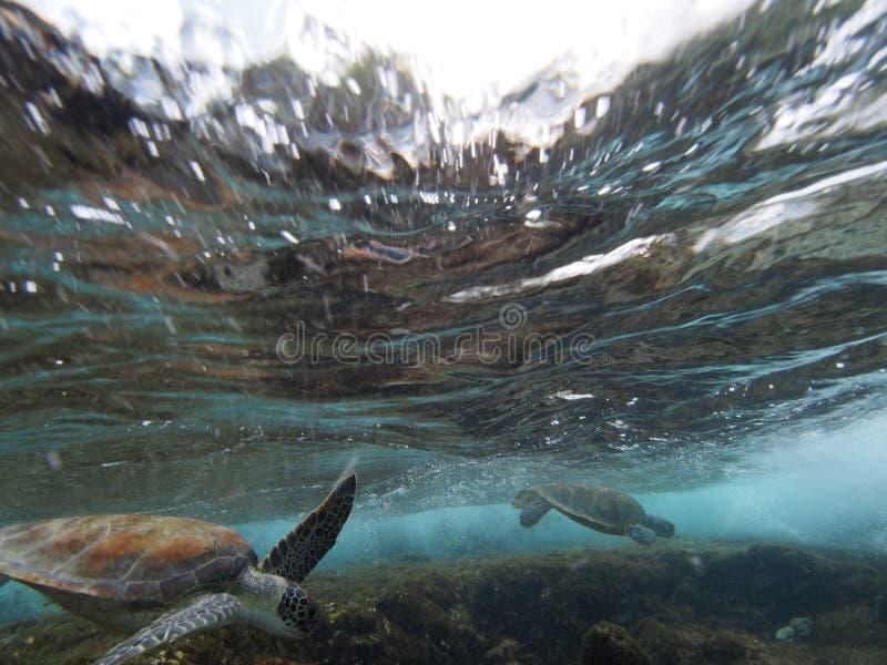 Κάνοντας σερφ πράσινη χελώνα στοκ εικόνα με δικαίωμα ελεύθερης χρήσης