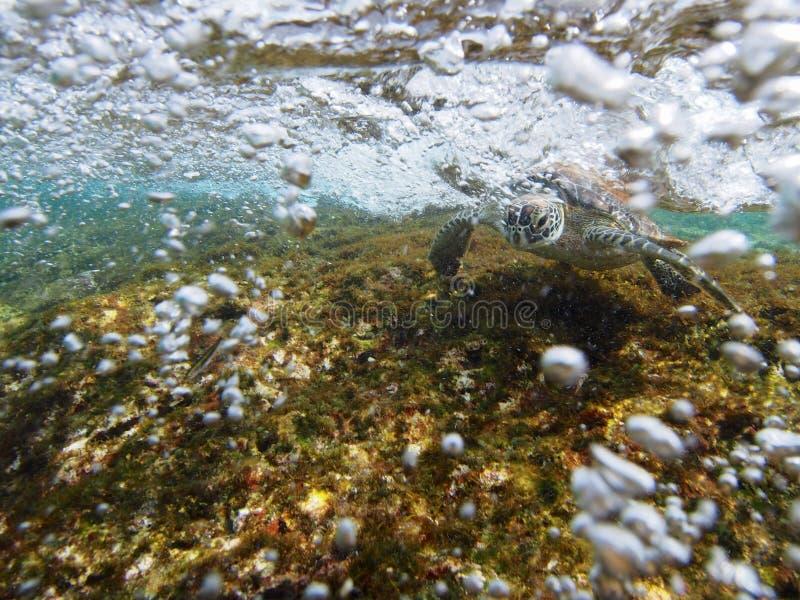 Κάνοντας σερφ πράσινη χελώνα στοκ φωτογραφίες με δικαίωμα ελεύθερης χρήσης