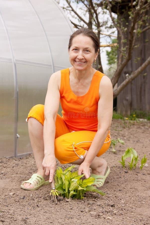 κάνοντας τον κήπο η εργασί& στοκ εικόνες με δικαίωμα ελεύθερης χρήσης
