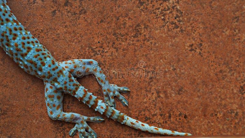 Κάποιο μέρος του όμορφου σώματος Gecko στον τοίχο στοκ φωτογραφία με δικαίωμα ελεύθερης χρήσης