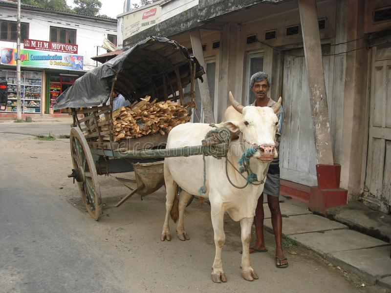 Κάρρο του Bullock στη Σρι Λάνκα στοκ φωτογραφία με δικαίωμα ελεύθερης χρήσης