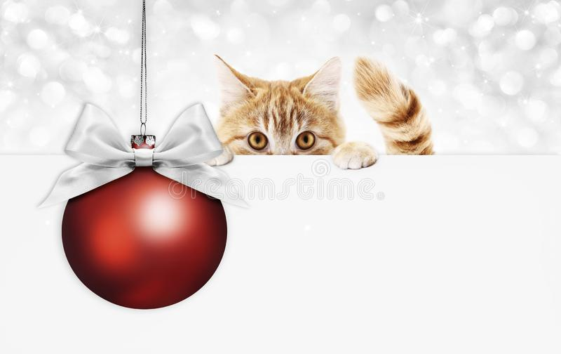 Κάρτα δώρων γατών πιπεροριζών Χριστουγέννων με την κόκκινη σφαίρα και την ασημένια κορδέλλα β στοκ φωτογραφία με δικαίωμα ελεύθερης χρήσης
