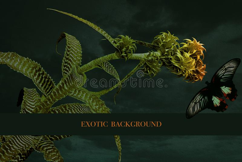 Κάρτα με άνθος και πεταλούδα Εξωτικό φόντο στοκ φωτογραφίες με δικαίωμα ελεύθερης χρήσης
