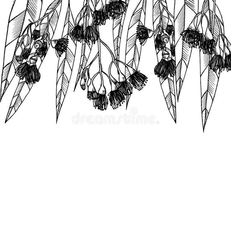 Κάρτα με τα eucalipts graphics διανυσματική απεικόνιση