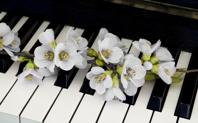 Κάρτα συλληπητήριων - λουλούδι στο πιάνο στοκ εικόνα με δικαίωμα ελεύθερης χρήσης