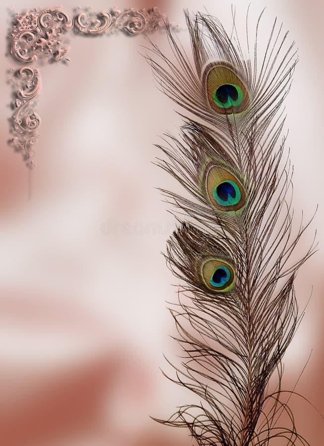 Κάρτα φτερών Peacock στοκ φωτογραφίες με δικαίωμα ελεύθερης χρήσης