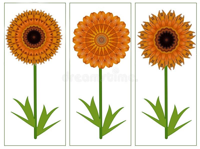 Κάρτα χαιρετισμών με τρία κίτρινα πορτοκαλιά θερινά λουλούδια διανυσματική απεικόνιση