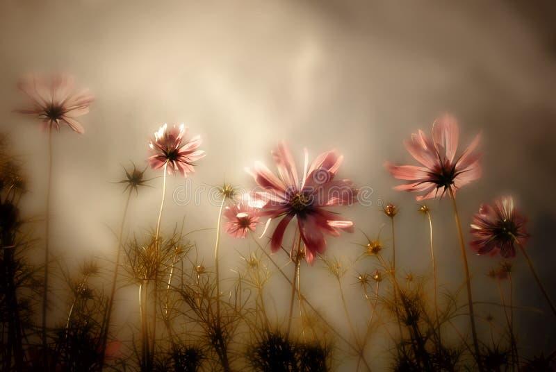 Κάρτα Wildflowers στοκ φωτογραφία