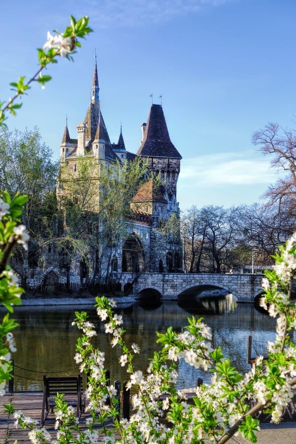Κάστρο Vajdahunyad με το δέντρο άνοιξη στη Βουδαπέστη, Ουγγαρία στοκ εικόνα