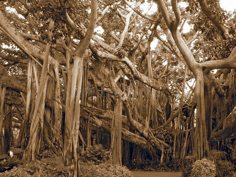 κάτω από την άνω πλευρά δέντρω&n στοκ εικόνες