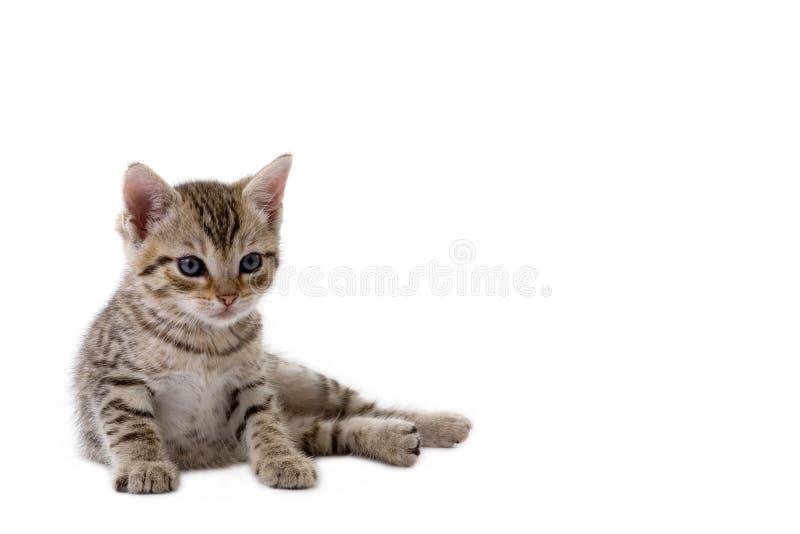κάτω από το γατάκι που βρίσ&kapp στοκ φωτογραφίες με δικαίωμα ελεύθερης χρήσης