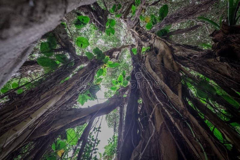 Κάτω από το δέντρο ζουγκλών στο τροπικό δάσος/το τροπικό δάσος στοκ εικόνες