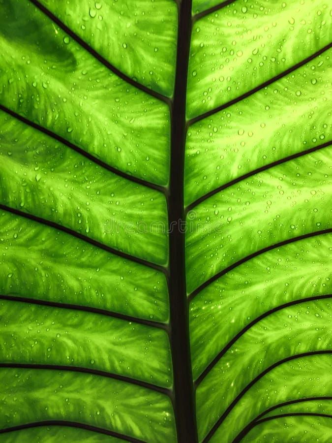 Κάτω από το πράσινο φύλλο με το φως στο υπόβαθρο πτώσεων νερού στοκ φωτογραφία με δικαίωμα ελεύθερης χρήσης