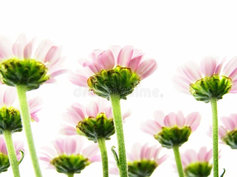 κάτω από το ροζ λουλουδιών στοκ φωτογραφία με δικαίωμα ελεύθερης χρήσης