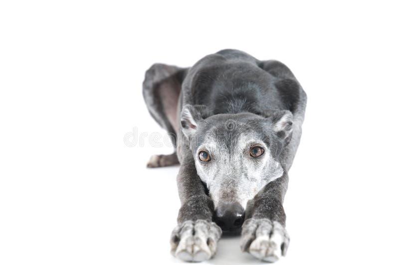 κάτω από greyhound να βρεθεί στοκ φωτογραφία με δικαίωμα ελεύθερης χρήσης
