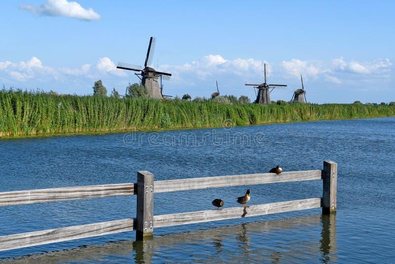 Κάτω Χώρες ανεμόμυλοι με πάπιες mallard στοκ φωτογραφία