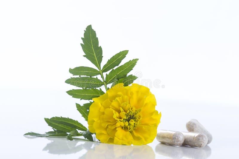 Κάψα marigold του εκχυλίσματος λουλουδιών Tagetes στοκ φωτογραφίες με δικαίωμα ελεύθερης χρήσης