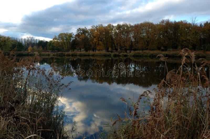 Κάλαμοι κοντά στον ποταμό στοκ εικόνα με δικαίωμα ελεύθερης χρήσης