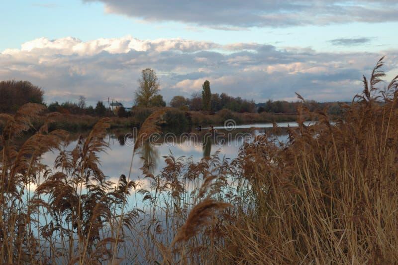 Κάλαμοι κοντά στον ποταμό στοκ εικόνα