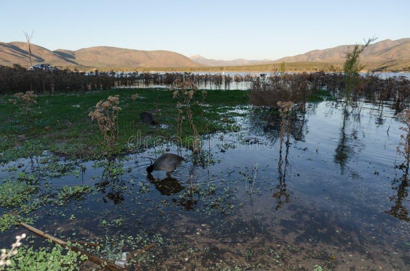 Κάλαμοι σε μια λίμνη στοκ εικόνα με δικαίωμα ελεύθερης χρήσης