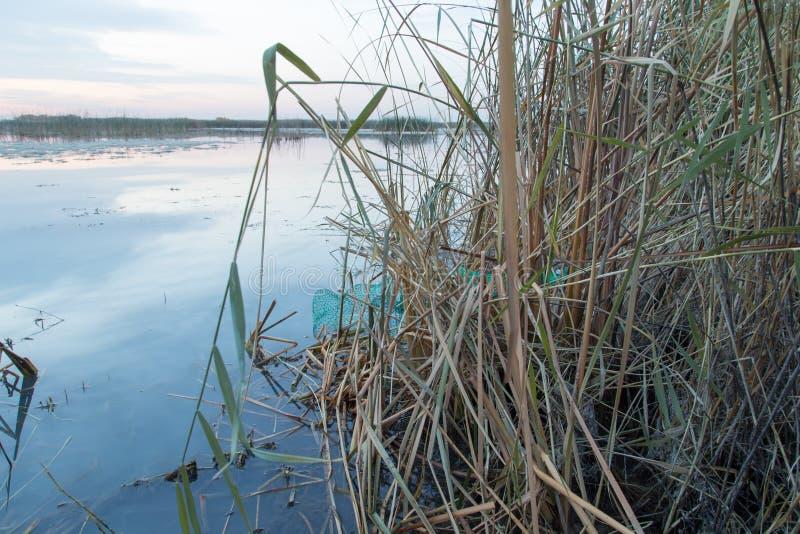 Κάλαμοι στη λίμνη στην ανατολή στοκ εικόνα