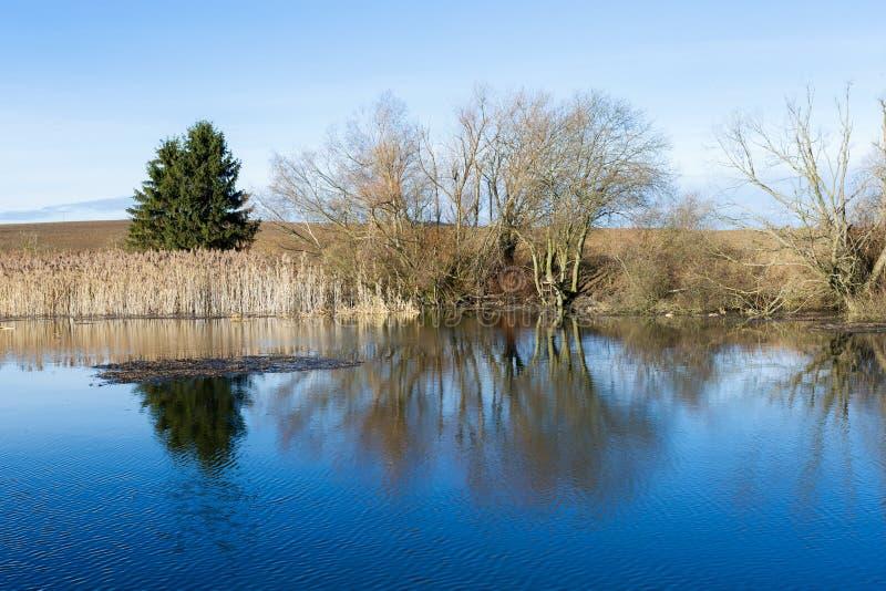 Κάλαμοι στη λίμνη στοκ φωτογραφία με δικαίωμα ελεύθερης χρήσης
