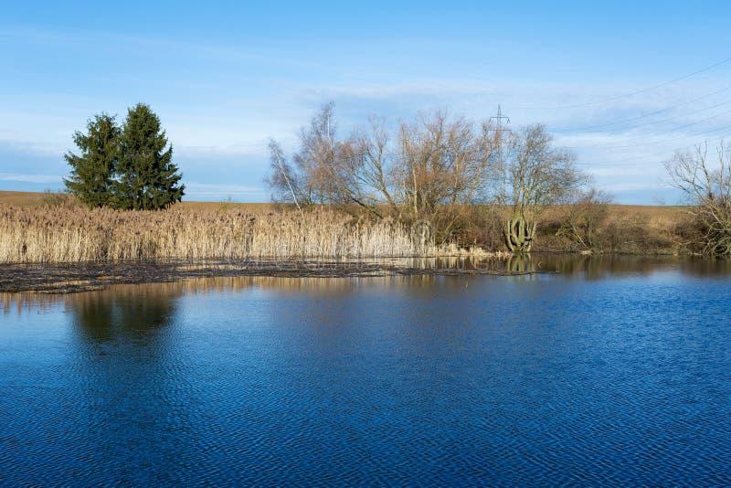 Κάλαμοι στη λίμνη στοκ εικόνες