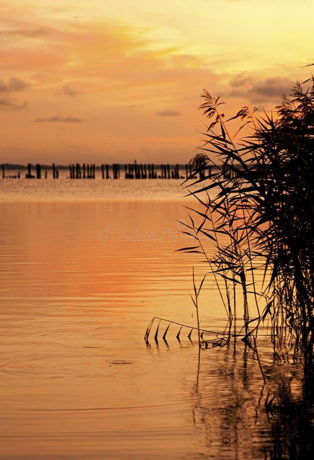 Κάλαμοι στο ηλιοβασίλεμα, Ruegen, Γερμανία στοκ φωτογραφία με δικαίωμα ελεύθερης χρήσης