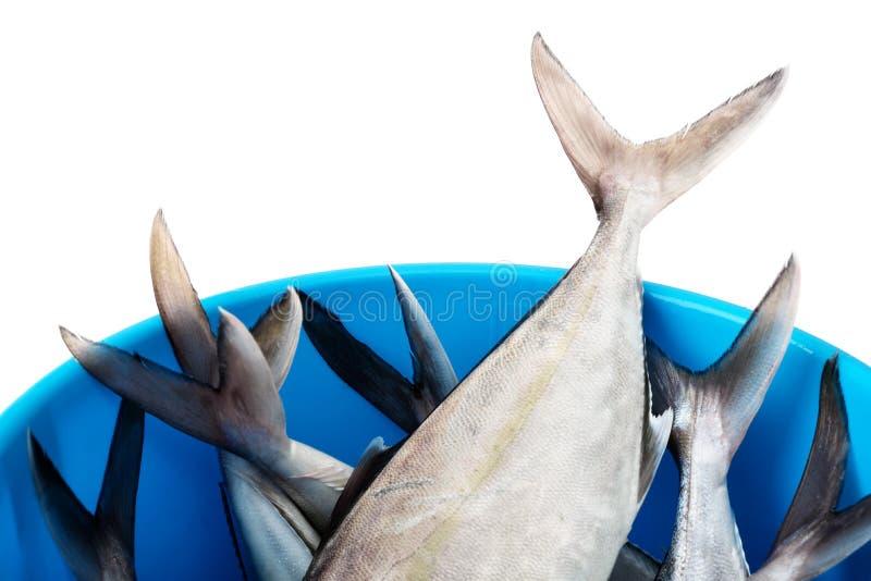 Κάδος με τα φρέσκα ψάρια στοκ φωτογραφίες
