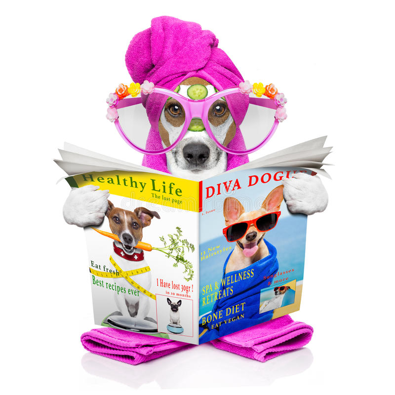 Κέντρο σκυλιών wellness spa στοκ εικόνες
