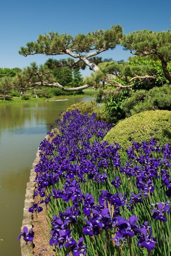 κήποι ιαπωνικά στοκ εικόνες