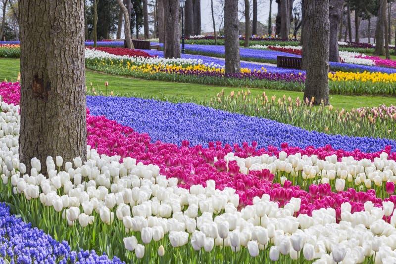 Κήποι τουλιπών στη Ιστανμπούλ, Τουρκία ως τμήμα του φεστιβάλ τουλιπών κάθε χρόνο στοκ εικόνες