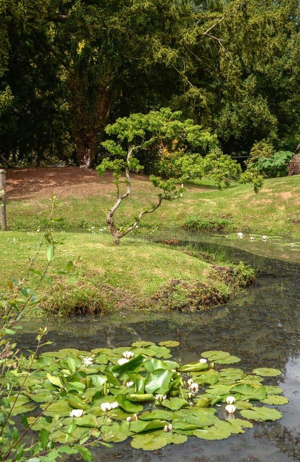 Κήποι του Castle Hedinham στοκ φωτογραφίες