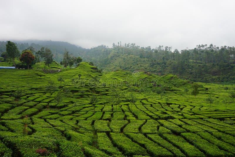 Κήποι τσαγιού φωτογραφιών στοκ εικόνα με δικαίωμα ελεύθερης χρήσης