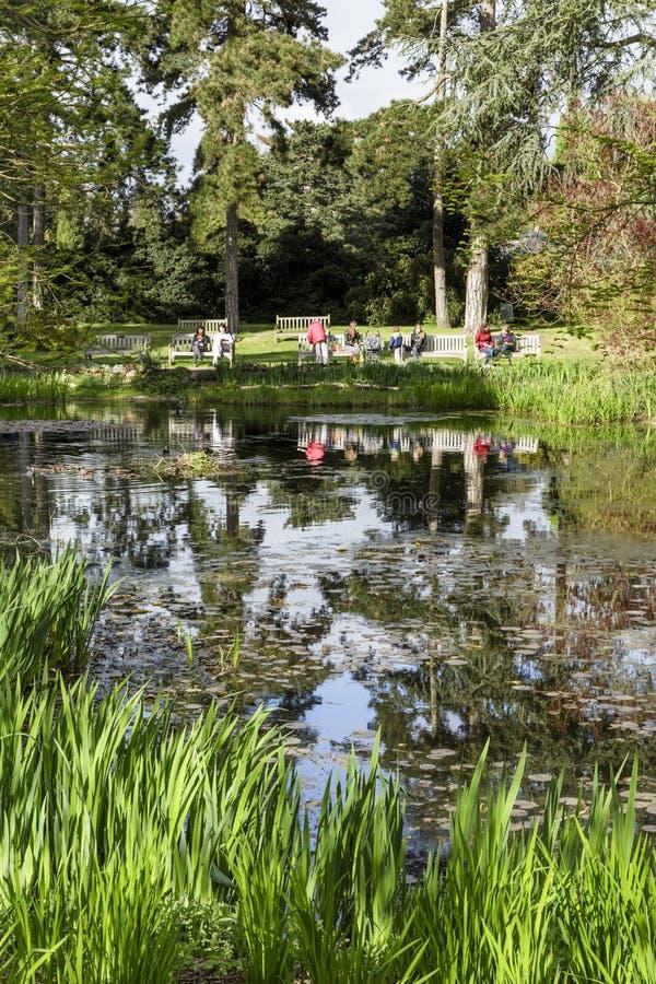 Κήποι Kew λιμνών Waterlily στοκ εικόνες με δικαίωμα ελεύθερης χρήσης
