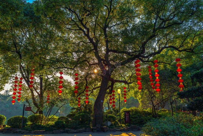 Κήπος έτοιμος για το νέο έτος στοκ εικόνες
