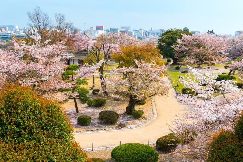 Κήπος ανθών κερασιών με το σύνολο του sakura στο φεστιβάλ Hanami μέσα στοκ φωτογραφίες
