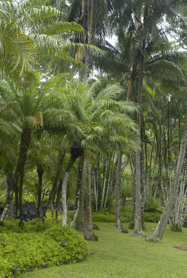 Download κήπος βαλατών στοκ εικόνα. εικόνα από διακοπές, καραϊβικός - 13182667
