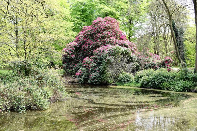 Κήπος Βόρεια Ιρλανδία Rowallane στοκ φωτογραφίες με δικαίωμα ελεύθερης χρήσης