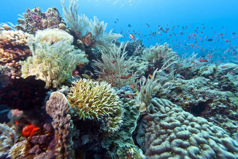 κήπος Ινδονησία κοραλλ&iota στοκ φωτογραφία