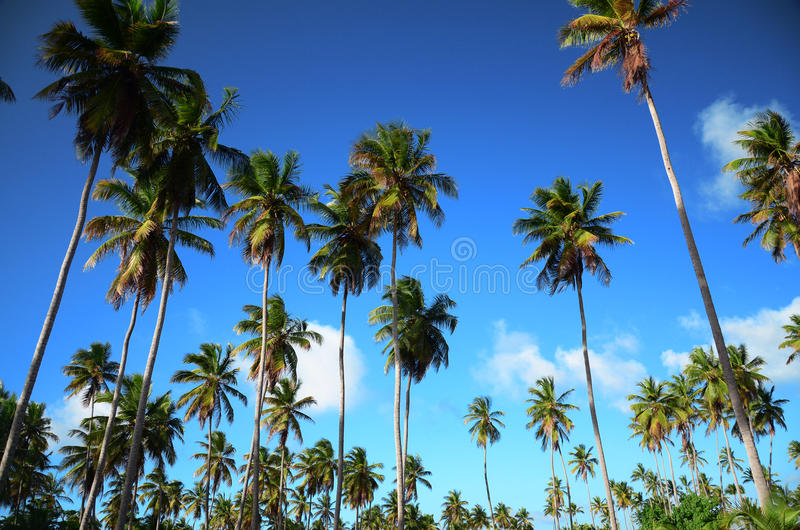 Κήπος και μπλε ουρανός φοινίκων στο τροπικό θέρετρο, δομινικανό Repu στοκ εικόνα με δικαίωμα ελεύθερης χρήσης