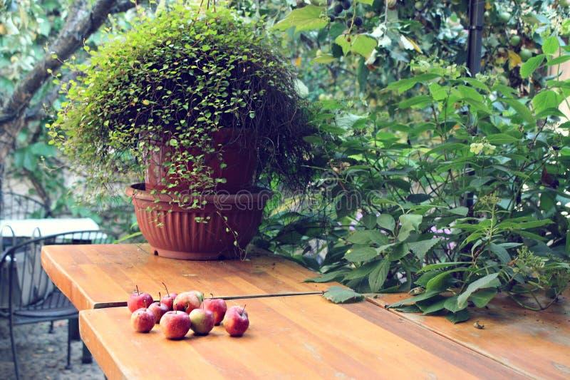 Κήπος και φθινόπωρο στοκ φωτογραφία