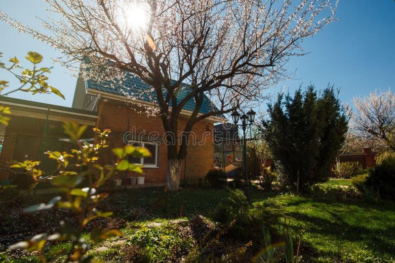 Κήπος κατωφλιών με τα πράσινα διαστήματα, τις εγκαταστάσεις, τα λουλούδια και τα δέντρα την άνοιξη στοκ εικόνες