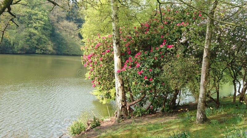 Κήπος κτημάτων Harewood στοκ εικόνα