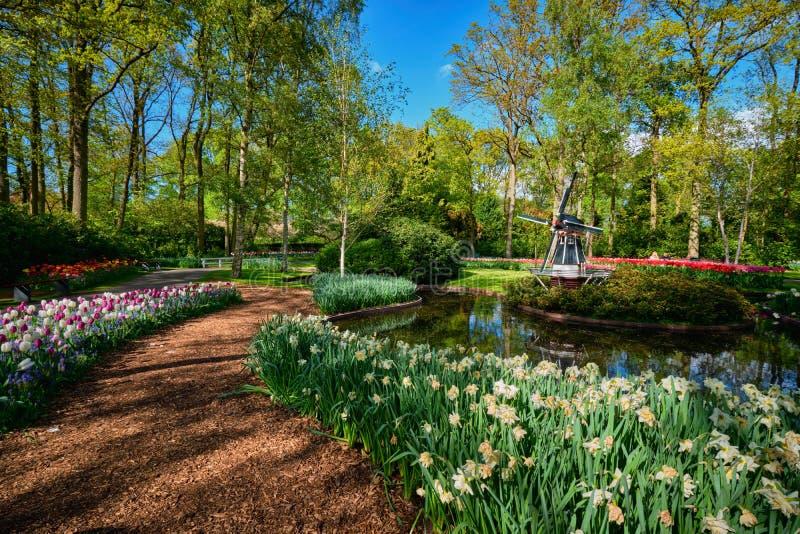 Κήπος λουλουδιών Keukenhof Lisse, οι Κάτω Χώρες στοκ φωτογραφία