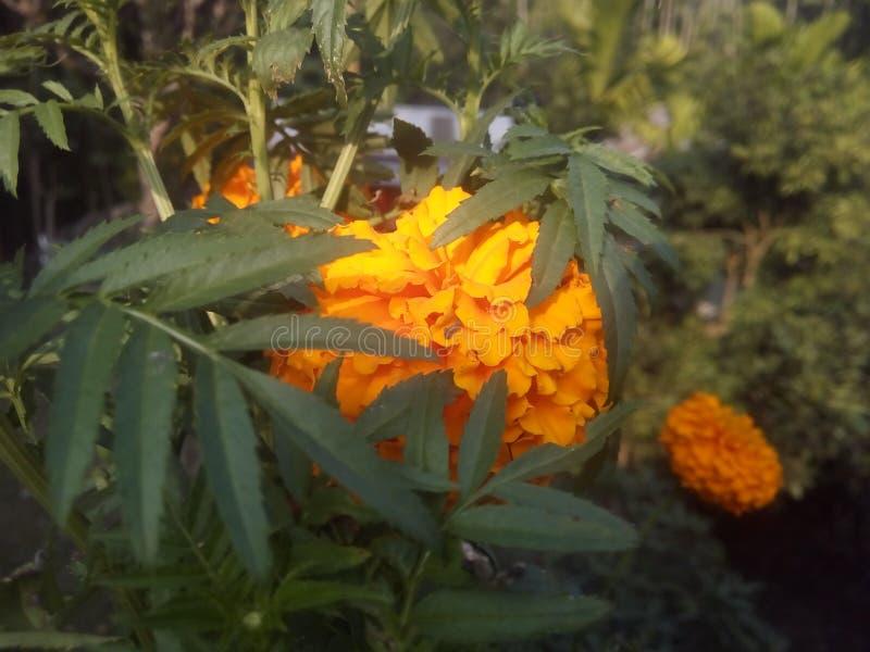 κήπος λουλουδιών wow στοκ εικόνες με δικαίωμα ελεύθερης χρήσης