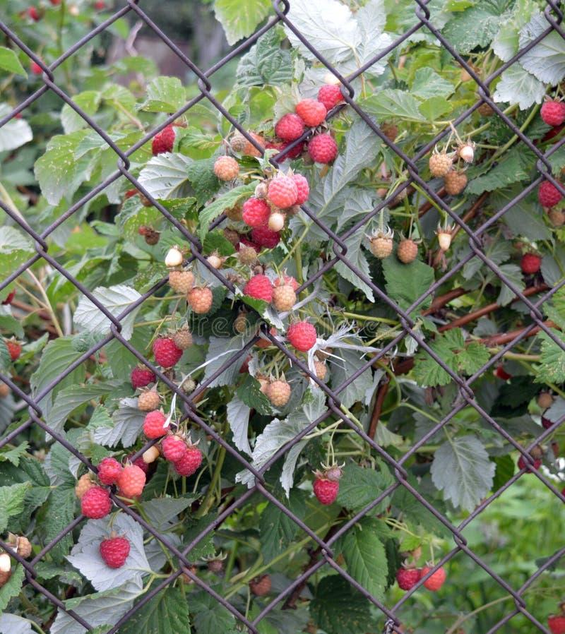 Κήπος, λουλούδι, λουλούδια, εγκαταστάσεις, φύση, καλοκαίρι, φράκτης, πράσινος, άνοιξη, κηπουρική, θερμοκήπιο, floral, κόκκινος, ά στοκ φωτογραφίες με δικαίωμα ελεύθερης χρήσης