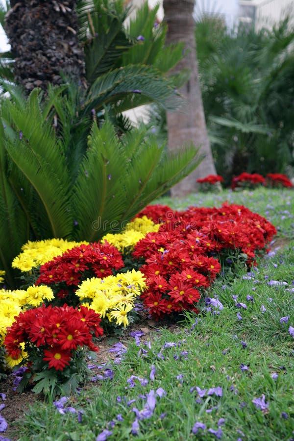Download κήπος μαργαριτών στοκ εικόνες. εικόνα από σύγχρονος, άνοιξη - 2232300