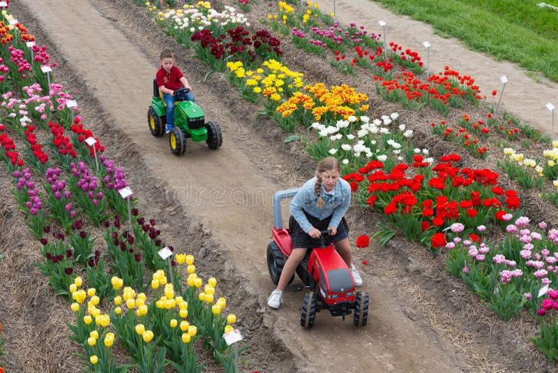 Κήπος με την έκθεση διάφορου είδους τουλιπών, οι Κάτω Χώρες στοκ εικόνα με δικαίωμα ελεύθερης χρήσης