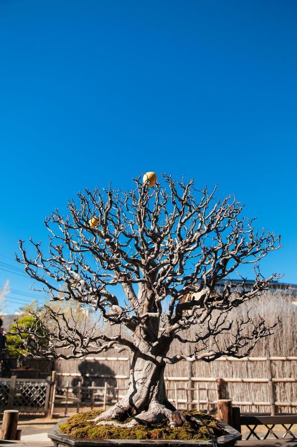 Κήπος μουσείων μπονσάι Omiya, Σαϊτάμα, Ιαπωνία στοκ φωτογραφία με δικαίωμα ελεύθερης χρήσης